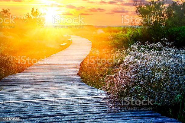 Photo of Wooden path meanders over heathland towards sunrise/sunset