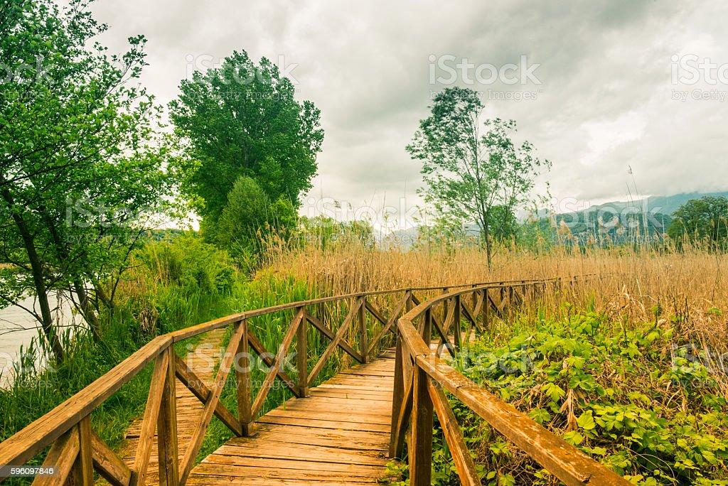 Hölzerne Weg über zuckerrohr dichte vegetation und Lizenzfreies stock-foto
