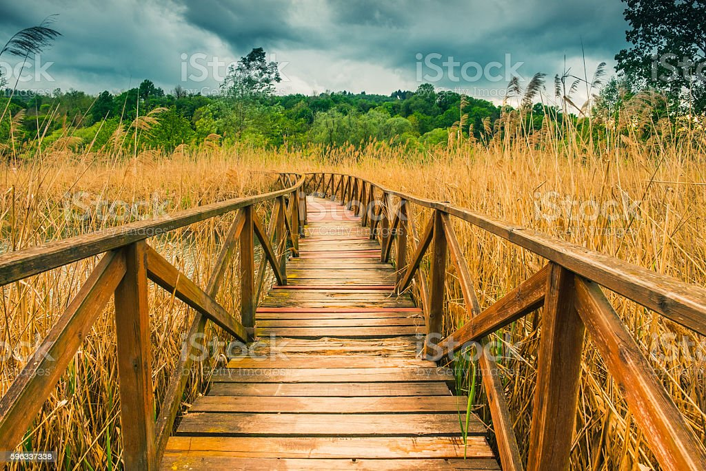 Wooden path on cane thicket and vegetation royalty-free stock photo