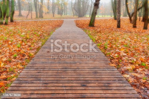 A wooden path or a path made of wooden planks in a forest park on an autumn day in Zelenogradsk.