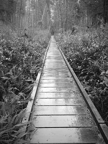 Wooden Path stock photo