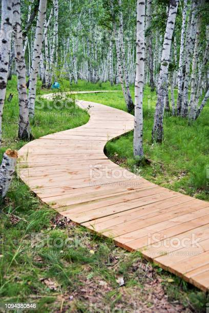 Photo of Wooden path through the birch forest