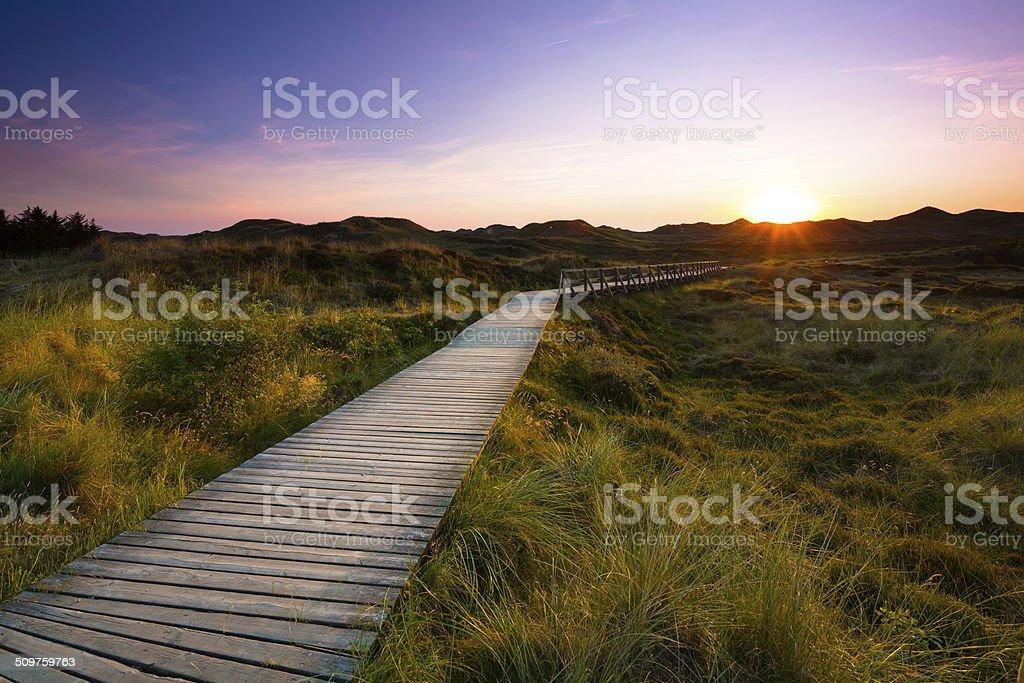 wooden path through the dunes stock photo