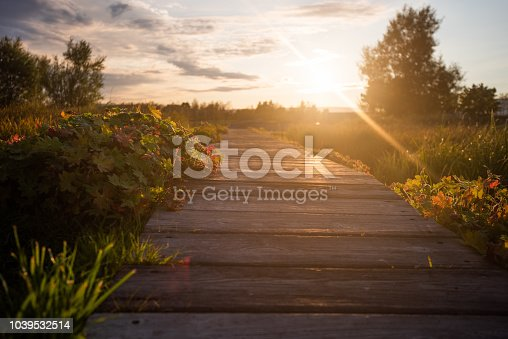 Wooden path in park.