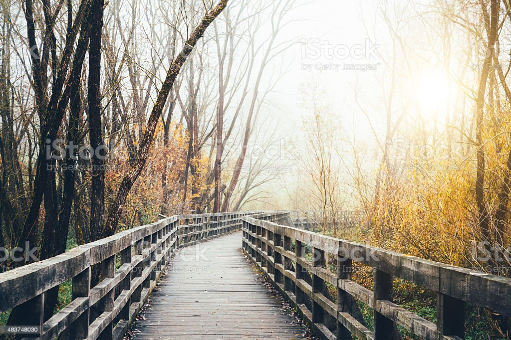 Wooden Path Through The Forest stock photo