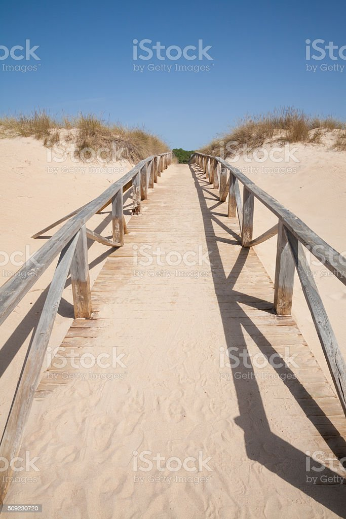 wooden path to green tree stock photo
