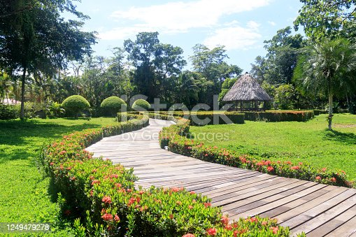 601026242 istock photo Wooden pathway in a green garden 1249479278