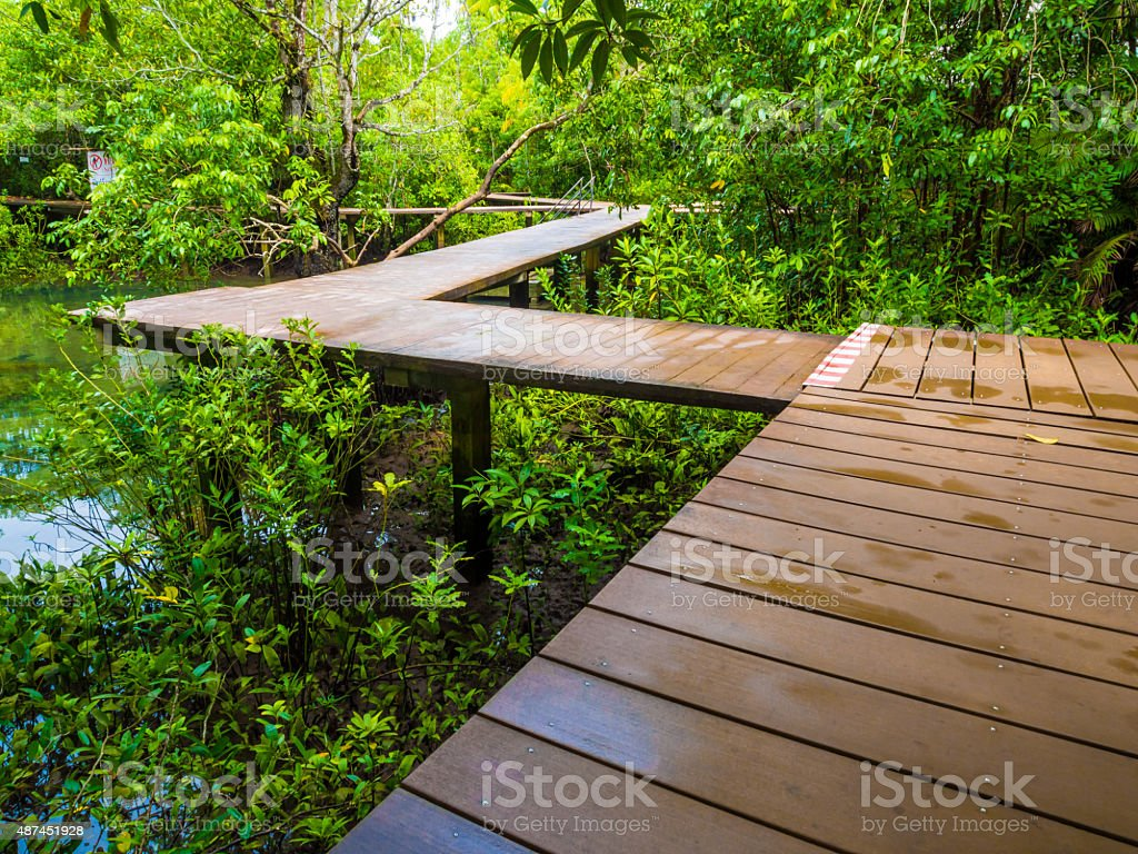 Wooden pathway in flooded rain forest jungle stock photo