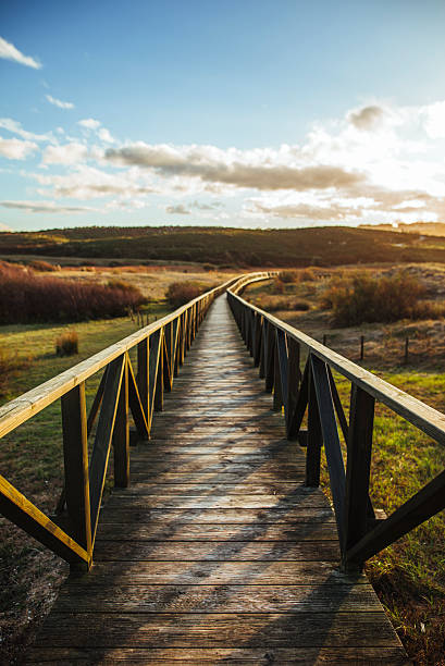 wooden pathway in the dunes - walkway and bridge stock photos and pictures
