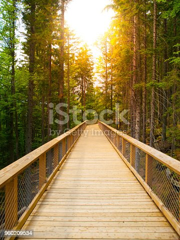 Wooden pathway in the forest, Sumava, Czech Republic