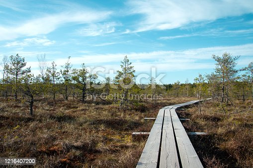 Wooden pathway over swamp for tourists