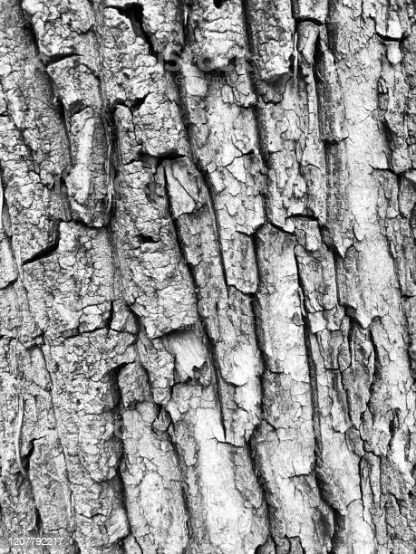 Photo of Wooden Pattern In Black and White