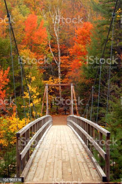 Photo of A wooden pedestrian footbridge leads to autumn colors in the White Mountains of New Hampshire