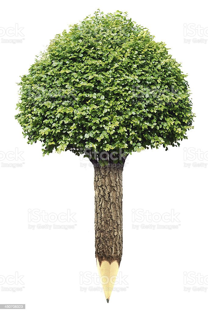 Wooden pencil with Tree on white background stock photo