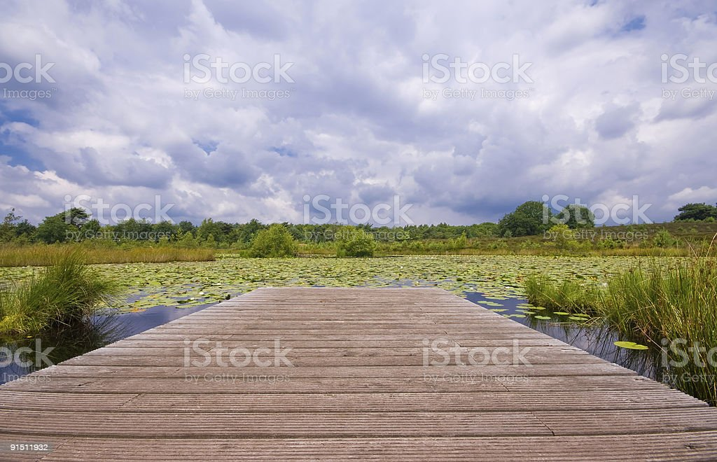 wooden pier on a lily pond royalty-free stock photo