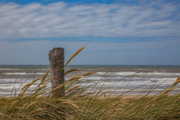 A wooden pile and marram grass on a dune close to the coast line of the north sea with blurry waves in the background