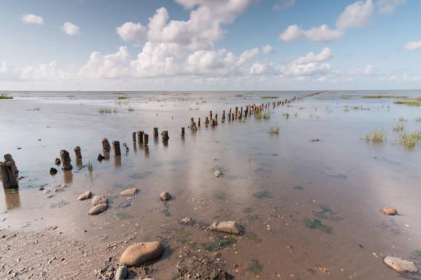 Wooden pillars breakwater forming a line on Danish Wadden Sea in Vadehavet National Park. Romo Island, Denmark stock photo