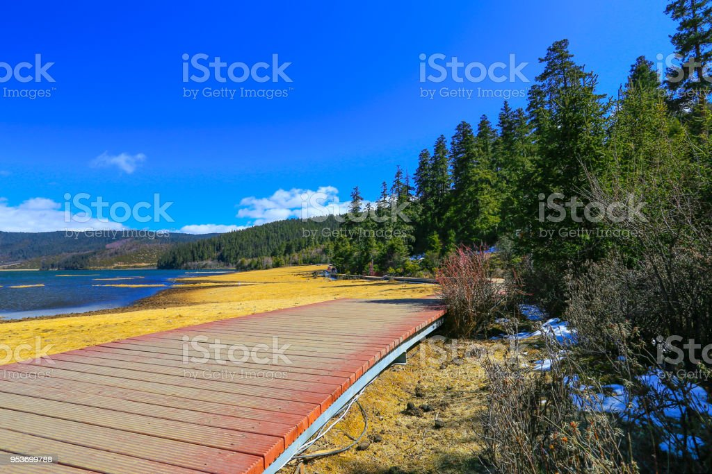 Wooden plank stretches into yellow forest in the middle of the forest...