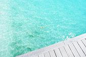 blacktip reef shark swimming in lagoon