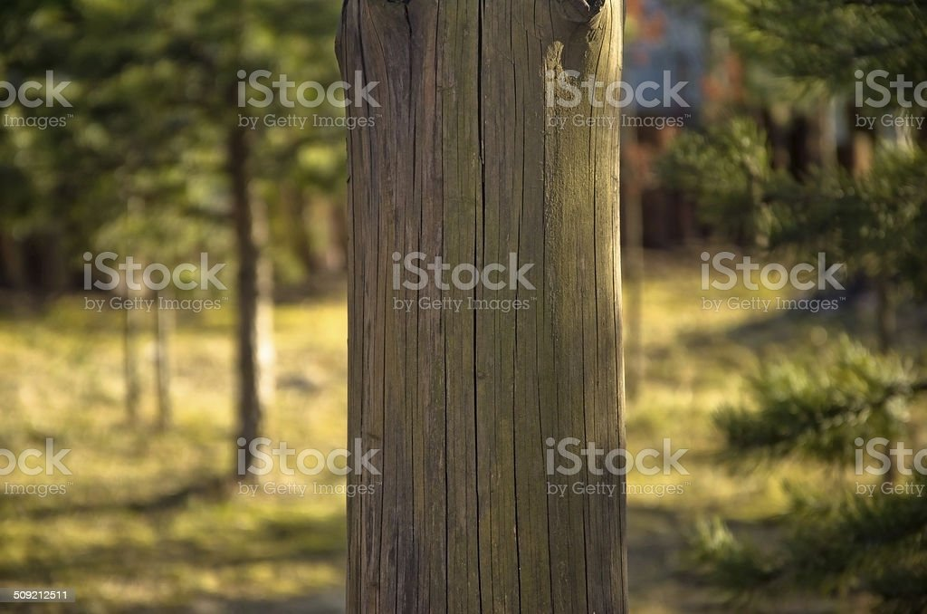 Wooden pole blank royalty-free stock photo