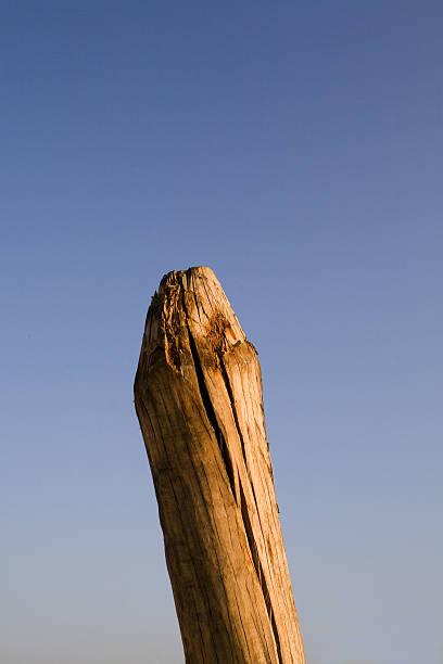 Wooden pole stock photo