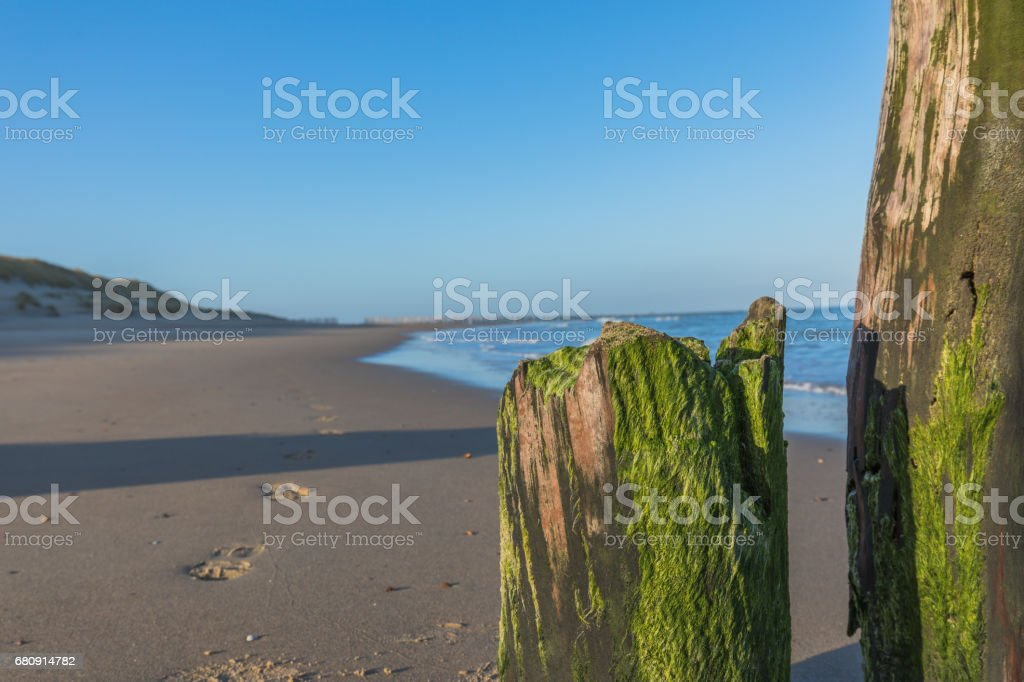 Wooden Pole With Algae Pattern At Empty Beach With Tracks - Wave Breaker royalty-free stock photo