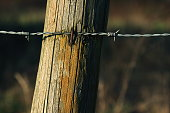 istock Wooden poles and rusty barbed wire 916844004