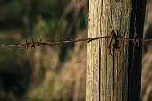 istock Wooden poles and rusty barbed wire 916844040