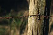 istock Wooden poles and rusty barbed wire 916844110