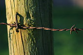istock Wooden poles and rusty barbed wire 916844132