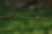 istock Wooden poles and rusty barbed wire 916844148