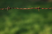 istock Wooden poles and rusty barbed wire 916844150