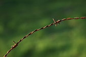 istock Wooden poles and rusty barbed wire 916844160