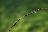 istock Wooden poles and rusty barbed wire 916844174