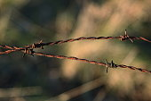 istock Wooden poles and rusty barbed wire 916844176