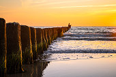 Wooden poles at the beach at golden sunset. Wave breaker pole heads in ocean water waves.