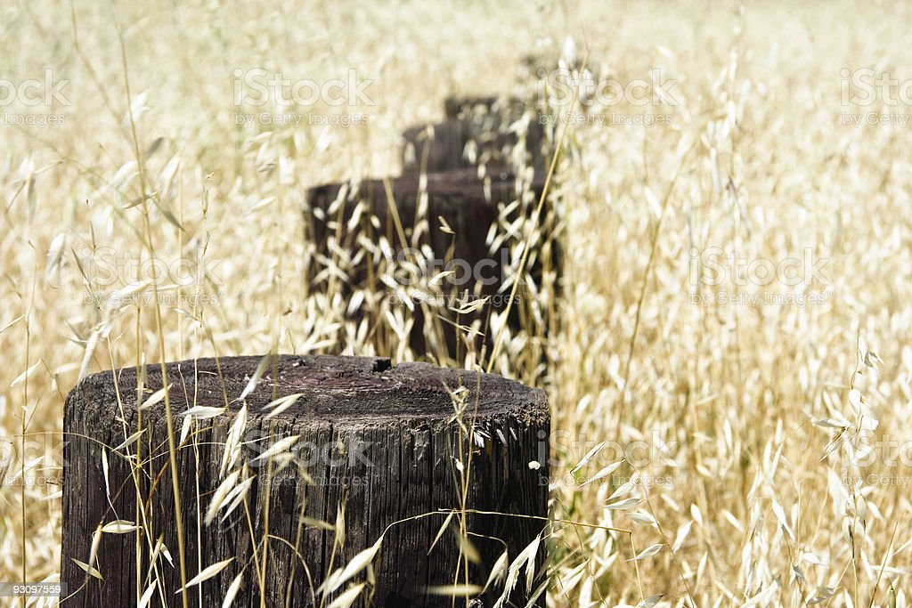 Wooden Posts in Dry Grass royalty-free stock photo