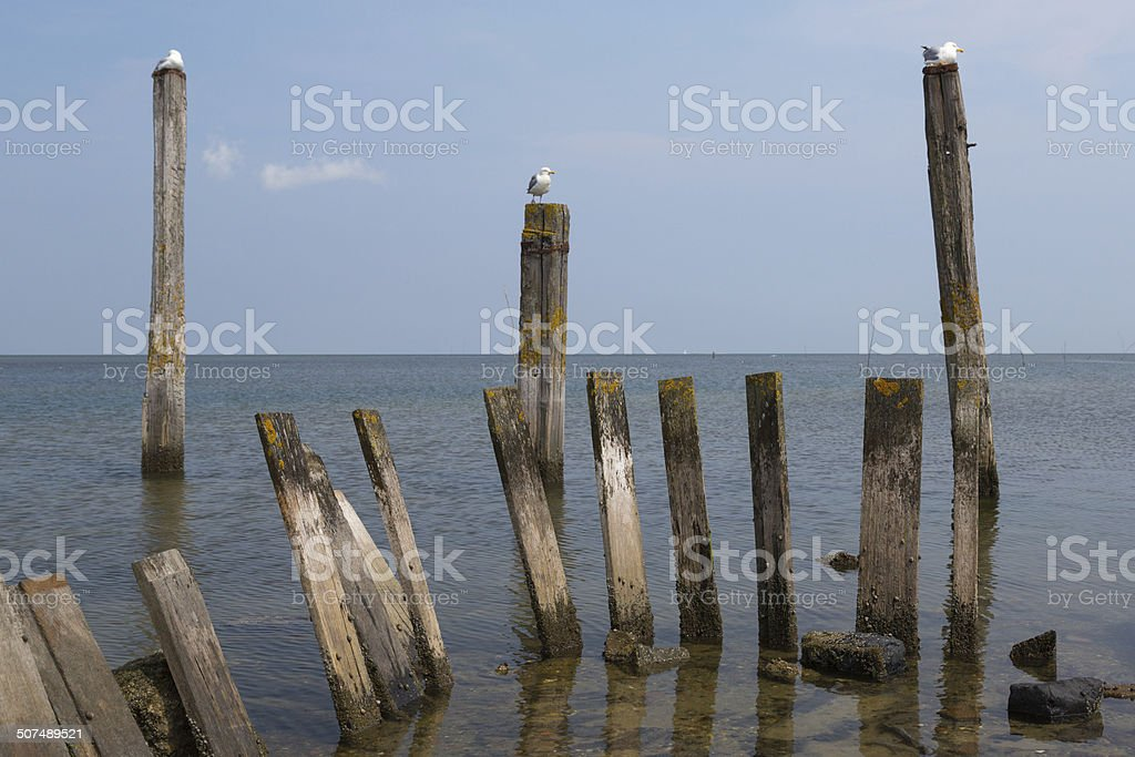 Wooden posts in water royalty-free stock photo