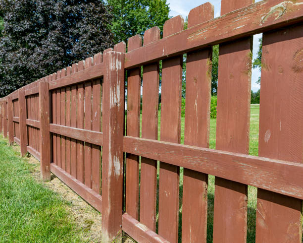 Wooden privacy fence in backyard with peeling paint and stain and green algae, mildew, and moss on boards stock photo