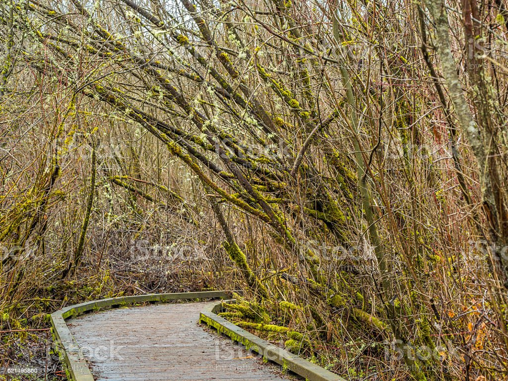 Wooden road through the autumn forest. Bare trees with moss. Lizenzfreies stock-foto