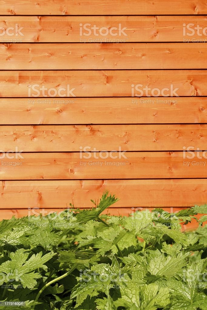 Wooden Shed, green plant in forground royalty-free stock photo