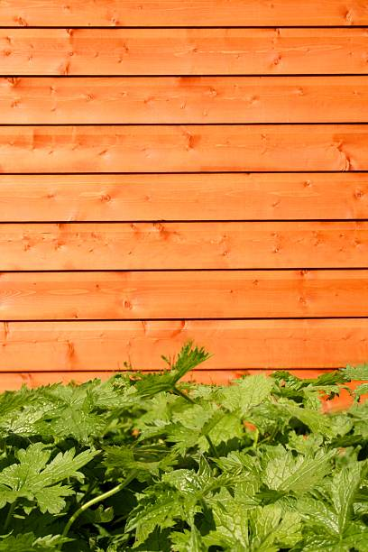 Wooden Shed, green plant in forground stock photo