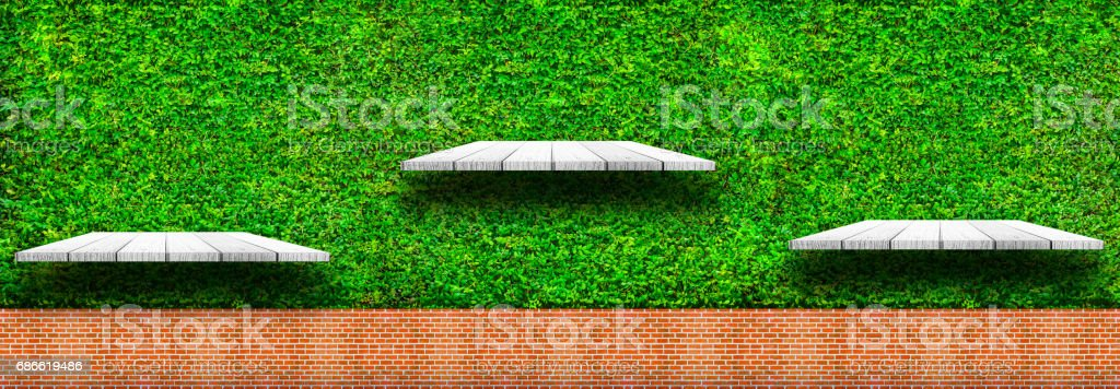 Wooden shelves with fresh green small plants and brick background royalty-free stock photo