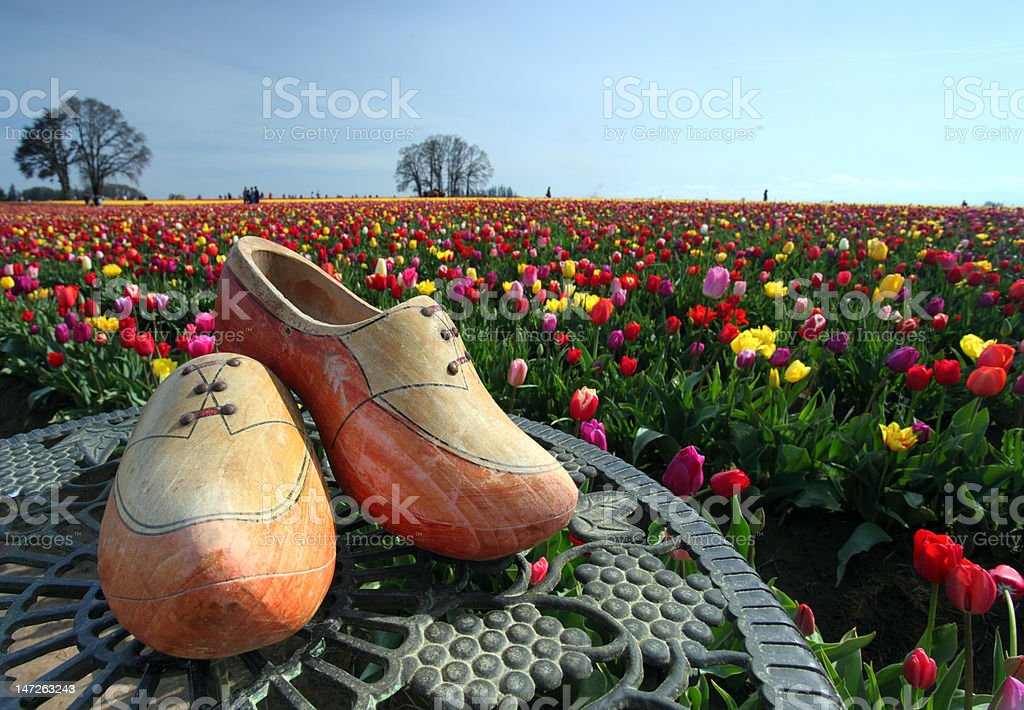 Wooden shoes and tulip garden royalty-free stock photo