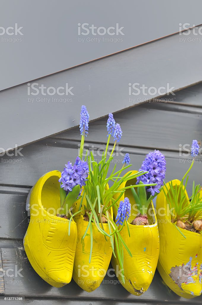 Wooden shoes Klomp like flowerpots with flowers stock photo