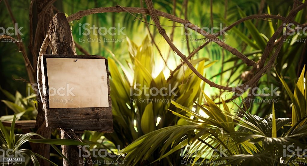 Wooden sign in the jungle stock photo