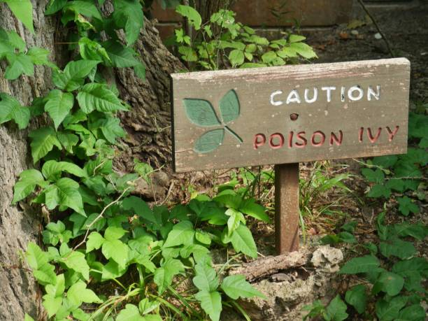 Wooden sign warning of poison ivy in a wooded area, Sign with poison ivy plants around Anglo American stock pictures, royalty-free photos & images
