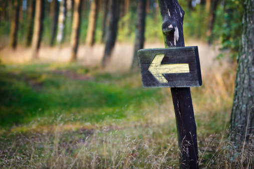 Wooden sign with yellow arrow in a forest