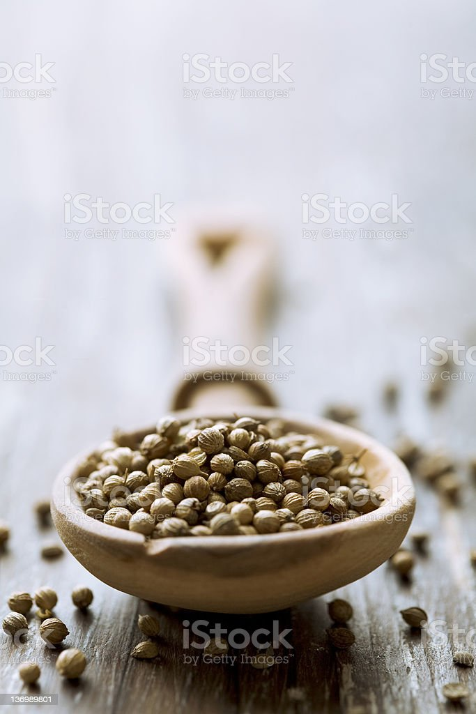 Wooden spoon full of coriander seeds stock photo