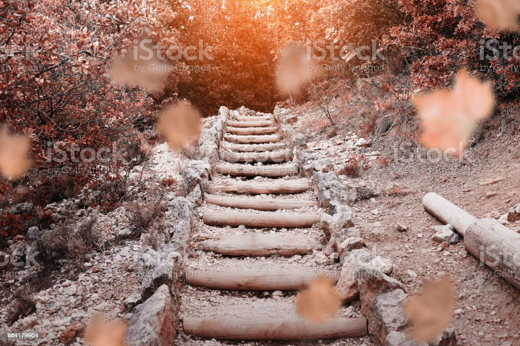 Wooden stairs in the autumn forest and leaves falling royalty-free stock photo